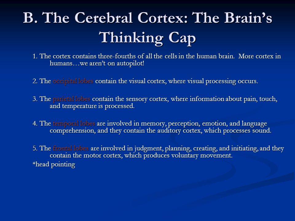 B. The Cerebral Cortex: The Brain's Thinking Cap