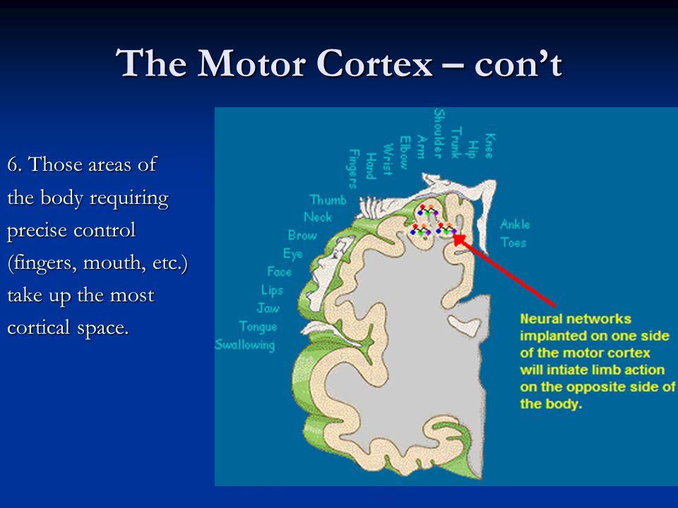 The Motor Cortex – con't