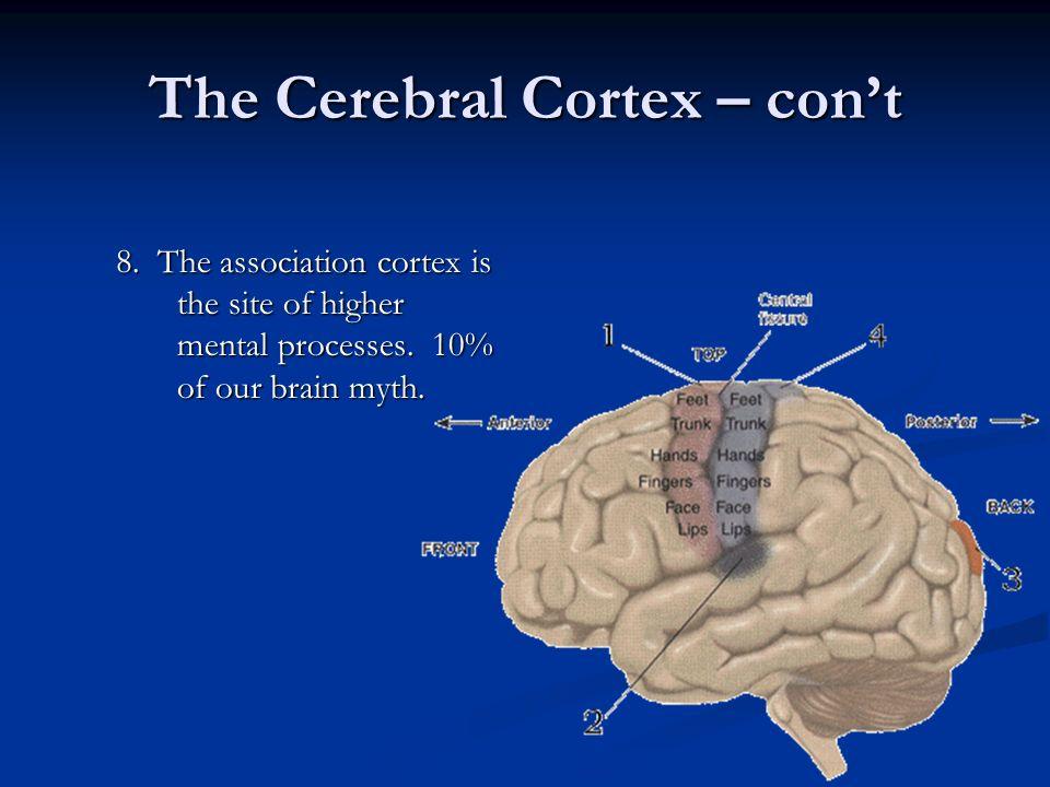 The Cerebral Cortex – con't