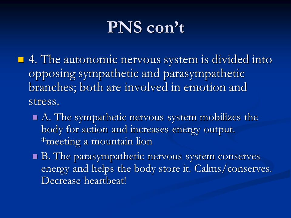 PNS con't 4. The autonomic nervous system is divided into opposing sympathetic and parasympathetic branches; both are involved in emotion and stress.