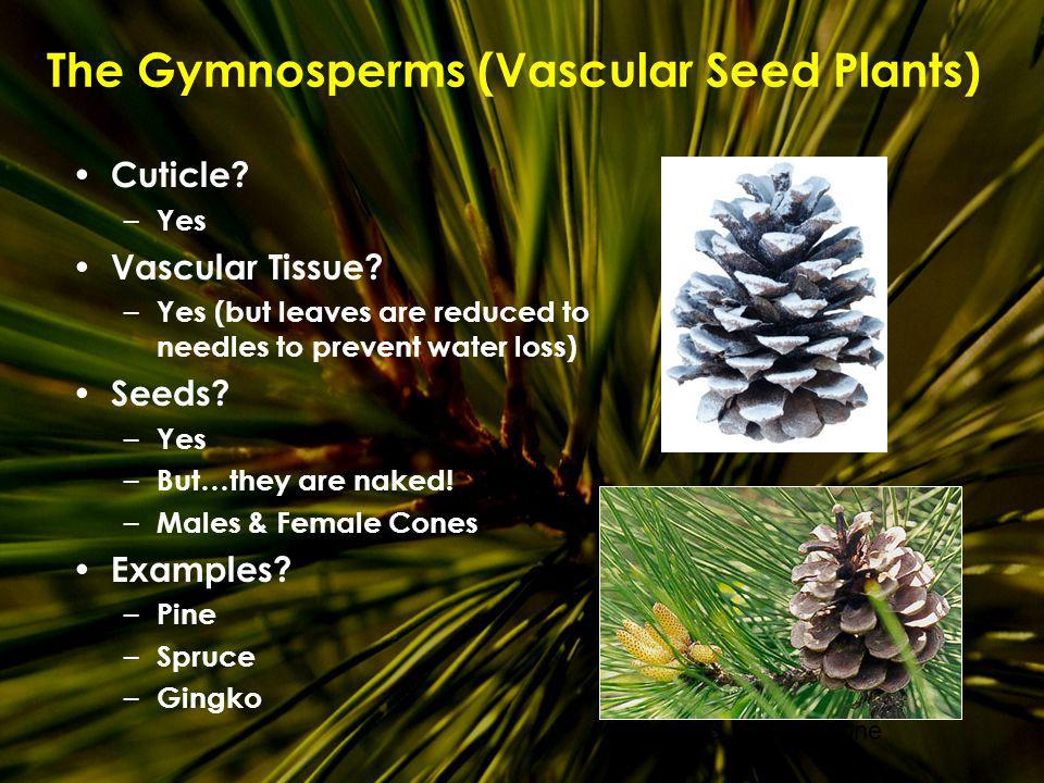 The Gymnosperms (Vascular Seed Plants)
