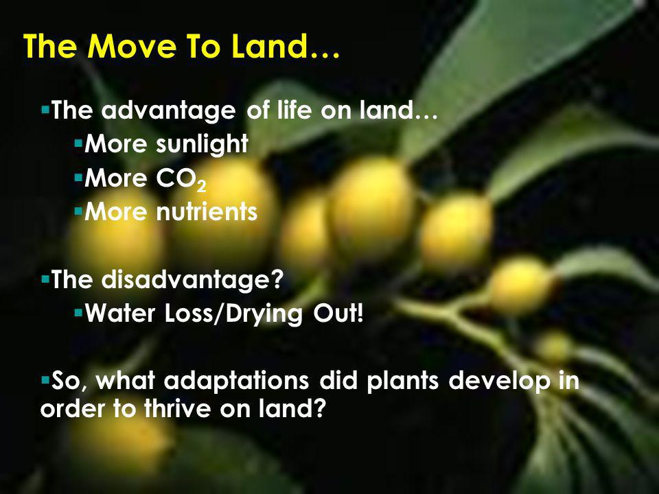 The Move To Land… The advantage of life on land… More sunlight