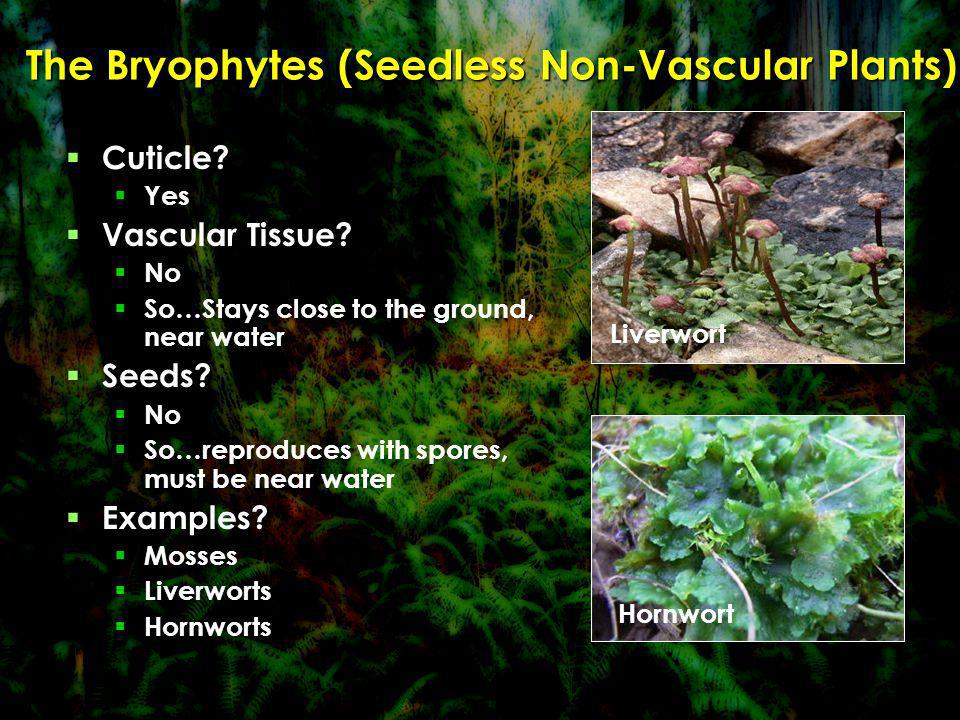 The Bryophytes (Seedless Non-Vascular Plants)