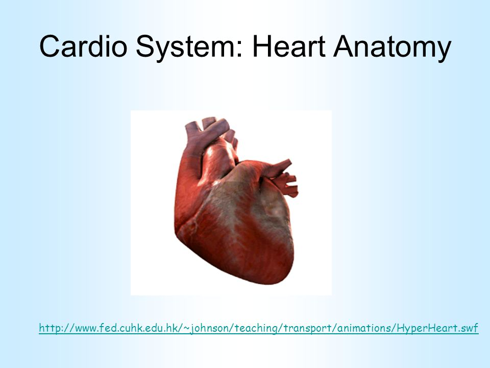 Cardio System: Heart Anatomy - ppt video online download