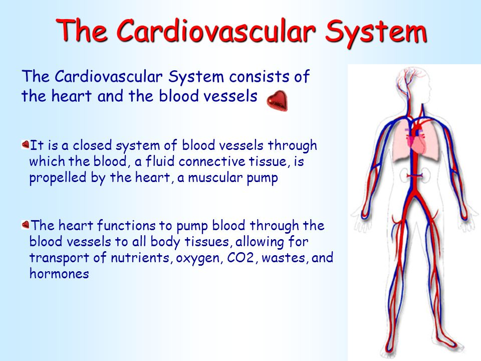 Anatomy of cardiovascular system