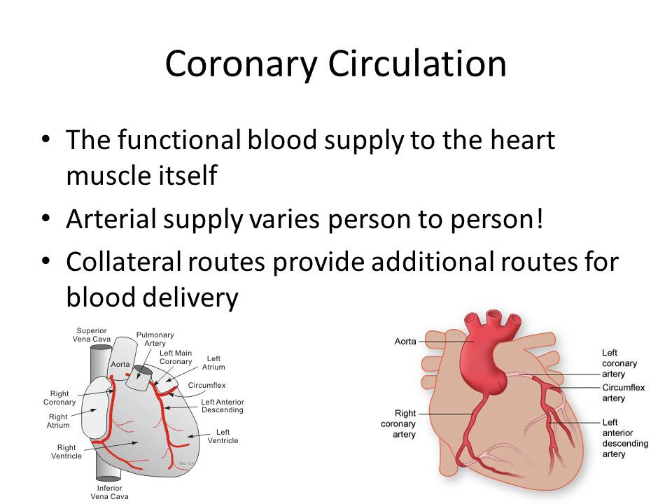 heart and collateral circulation