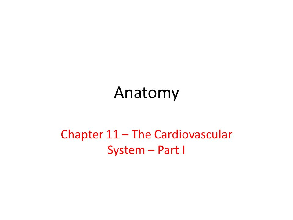 Chapter 11 – The Cardiovascular System – Part I - ppt video online ...