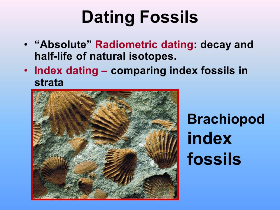 dating fossils by strata Therefore, by dating a series of rocks in a vertical succession of strata previously recognized with basic geologic principles (see stratigraphic principles and relative time), it can provide a numerical calibration for what would otherwise be only an ordering of events -- ie relative dating obtained from biostratigraphy (fossils), superpositional.