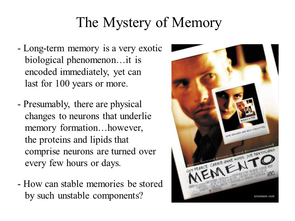 The Mystery of Memory - Long-term memory is a very exotic