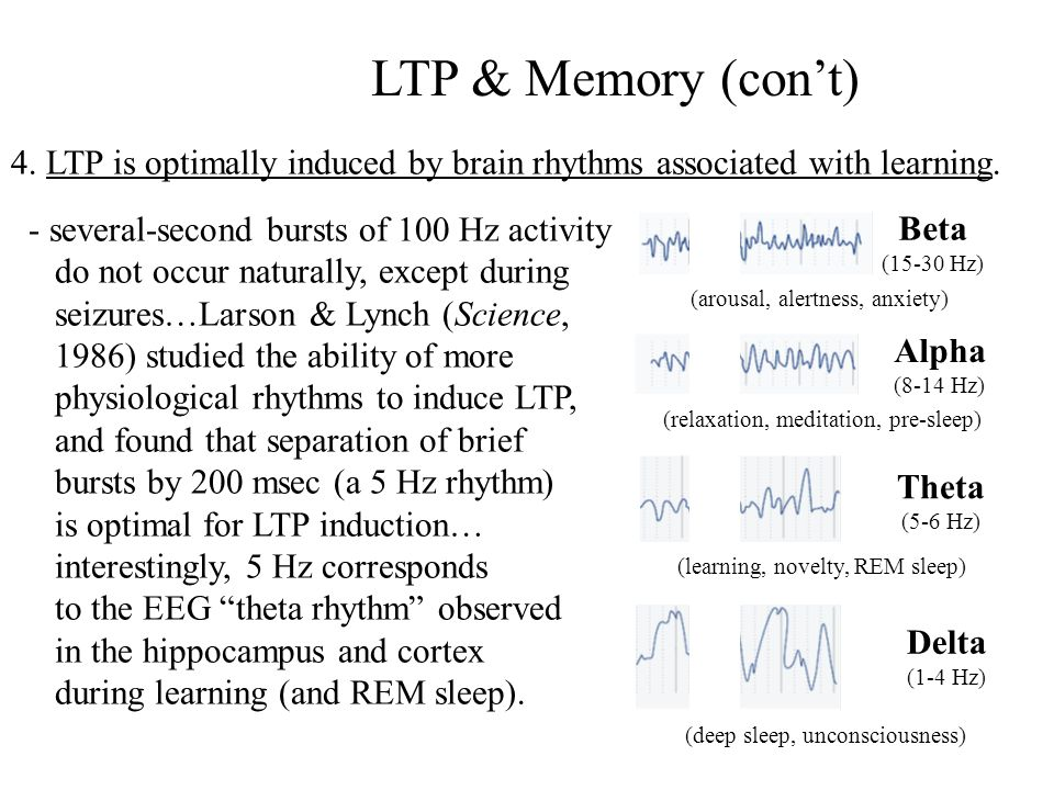 LTP & Memory (con't) 4. LTP is optimally induced by brain rhythms associated with learning. - several-second bursts of 100 Hz activity.