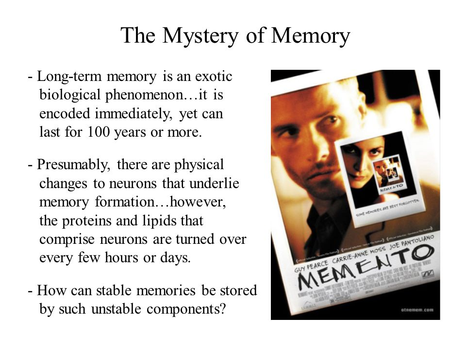The Mystery of Memory - Long-term memory is an exotic