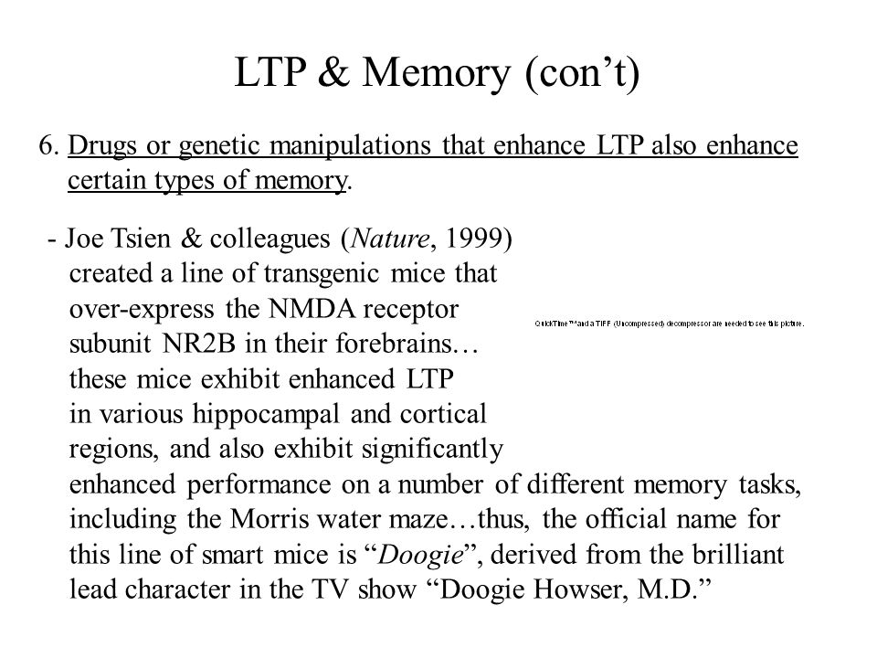 LTP & Memory (con't) 6. Drugs or genetic manipulations that enhance LTP also enhance. certain types of memory.