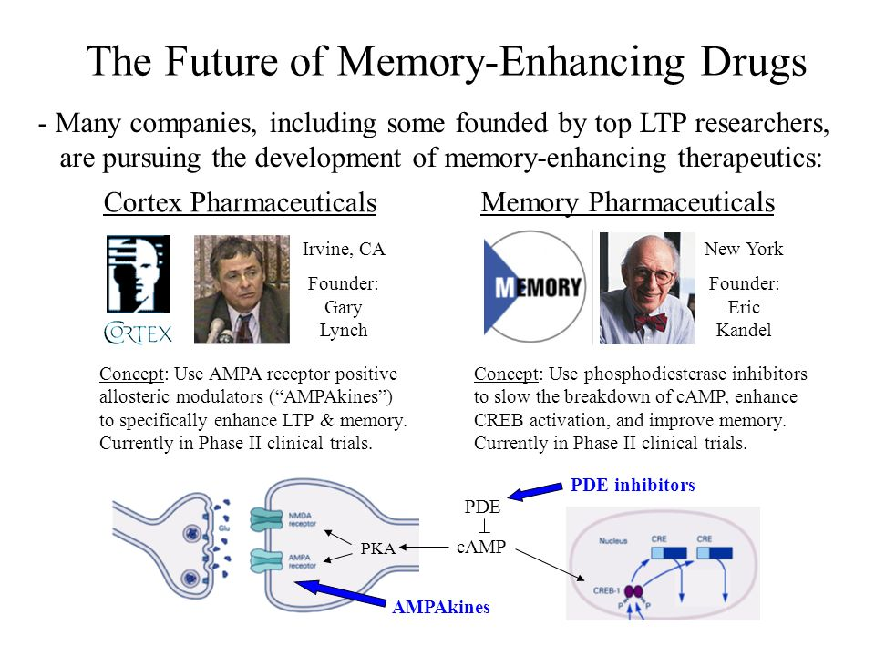The Future of Memory-Enhancing Drugs