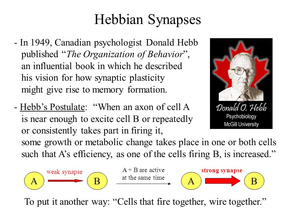 Hebbian Synapses - In 1949, Canadian psychologist Donald Hebb
