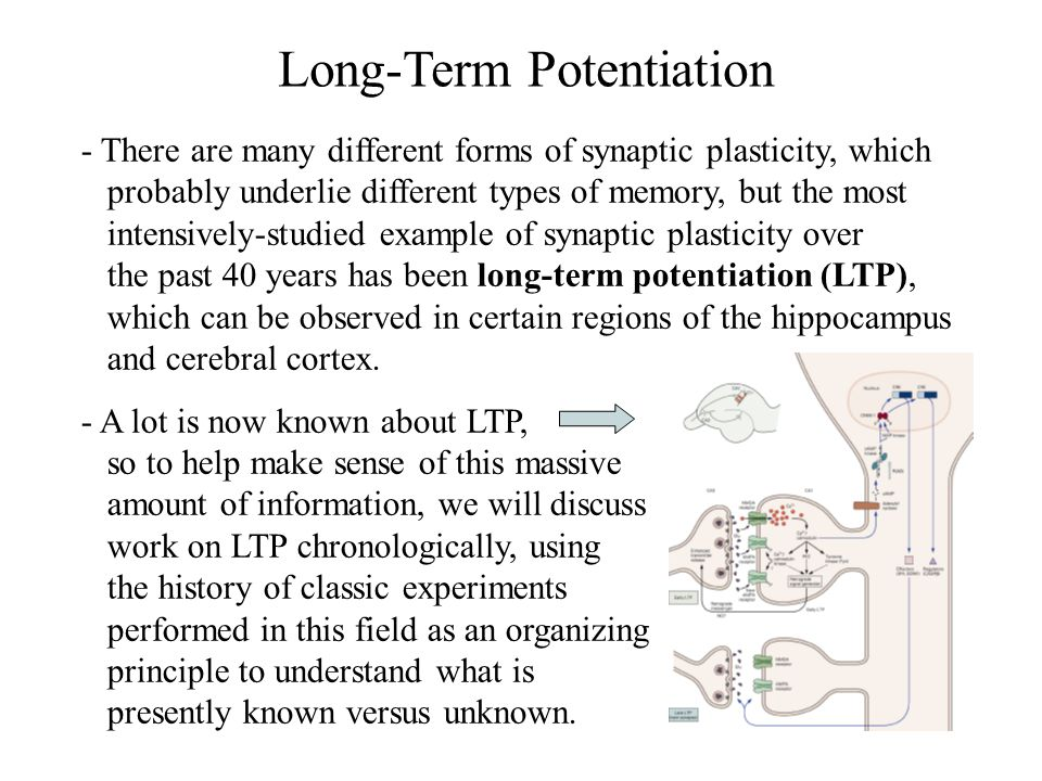 Long-Term Potentiation