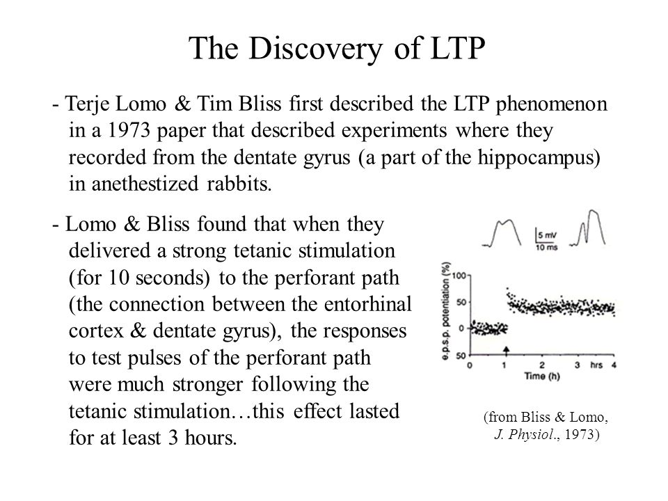 The Discovery of LTP - Terje Lomo & Tim Bliss first described the LTP phenomenon. in a 1973 paper that described experiments where they.
