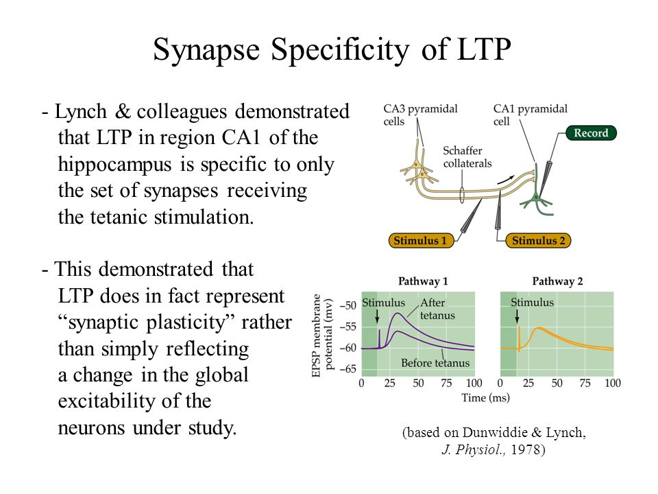 Synapse Specificity of LTP