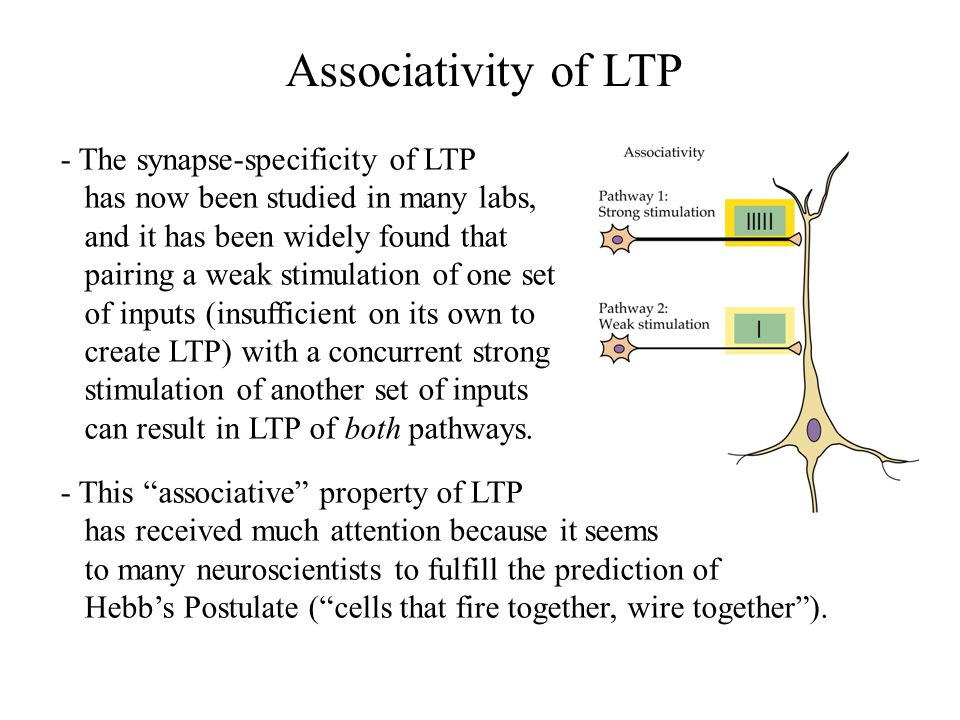 Associativity of LTP - The synapse-specificity of LTP