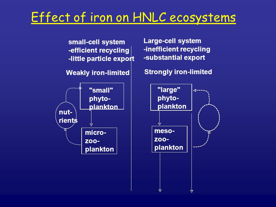 Effect of iron on HNLC ecosystems