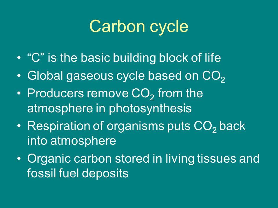 Carbon cycle C is the basic building block of life