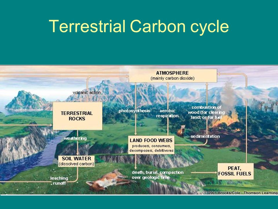 Terrestrial Carbon cycle