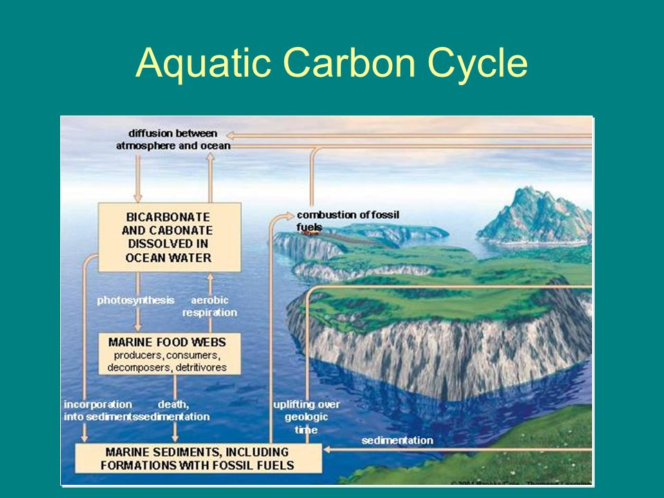 Cycling of matter ib syllabus ch ppt download 17 aquatic carbon cycle ccuart Image collections