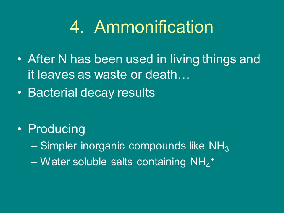4. Ammonification After N has been used in living things and it leaves as waste or death… Bacterial decay results.