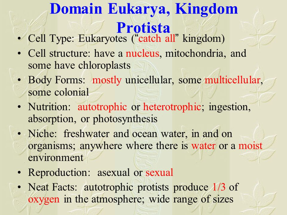 Domain Eukarya, Kingdom Protista