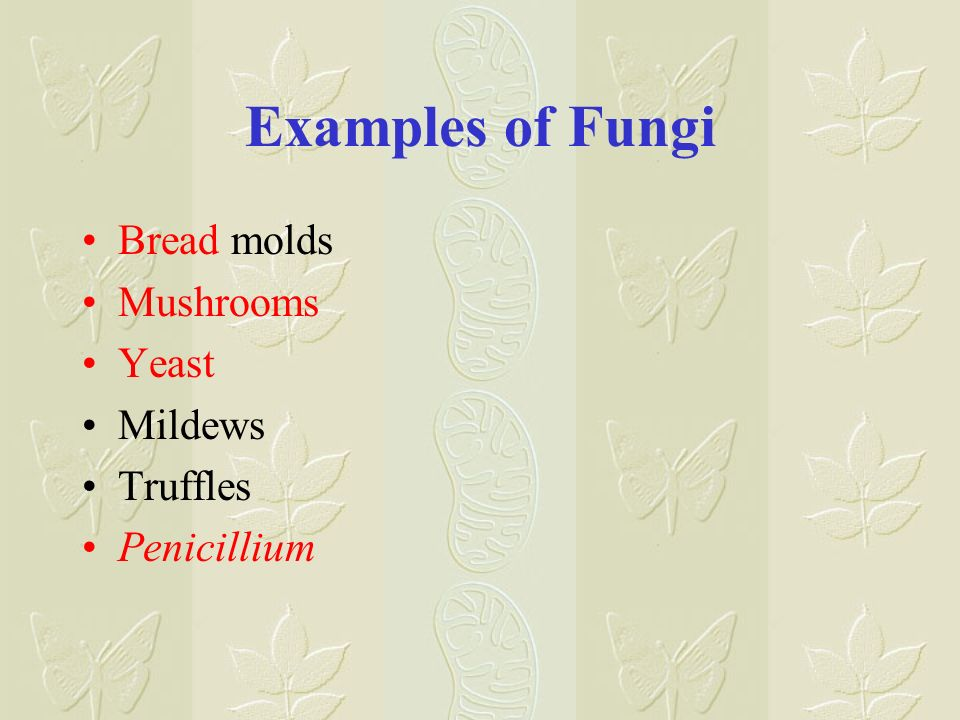 Examples of Fungi Bread molds Mushrooms Yeast Mildews Truffles