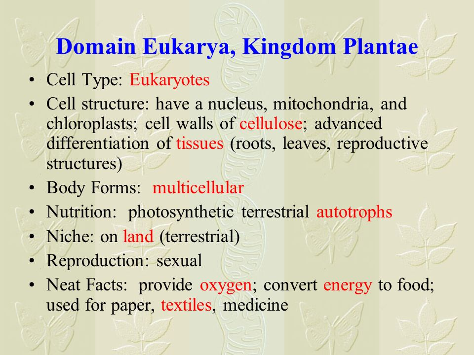 Domain Eukarya, Kingdom Plantae