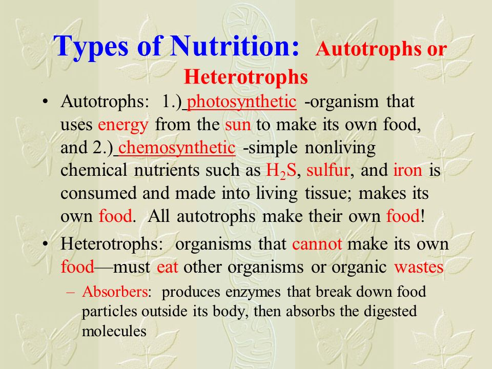 Types of Nutrition: Autotrophs or Heterotrophs