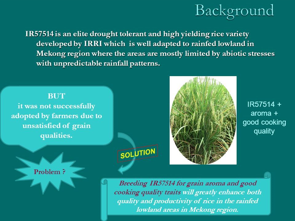 rice grain quality traits for a successful relationship