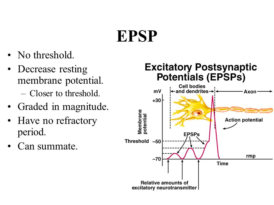 EPSP No threshold. Decrease resting membrane potential.