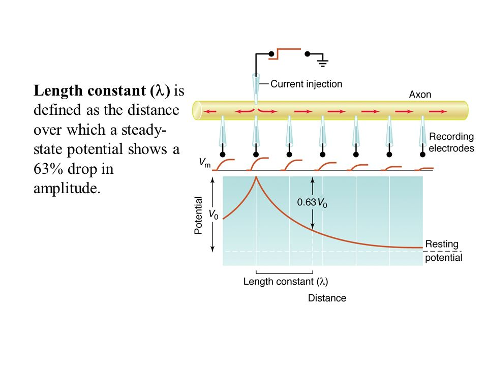 Length constant () is defined as the distance over which a steady-state potential shows a 63% drop in amplitude.