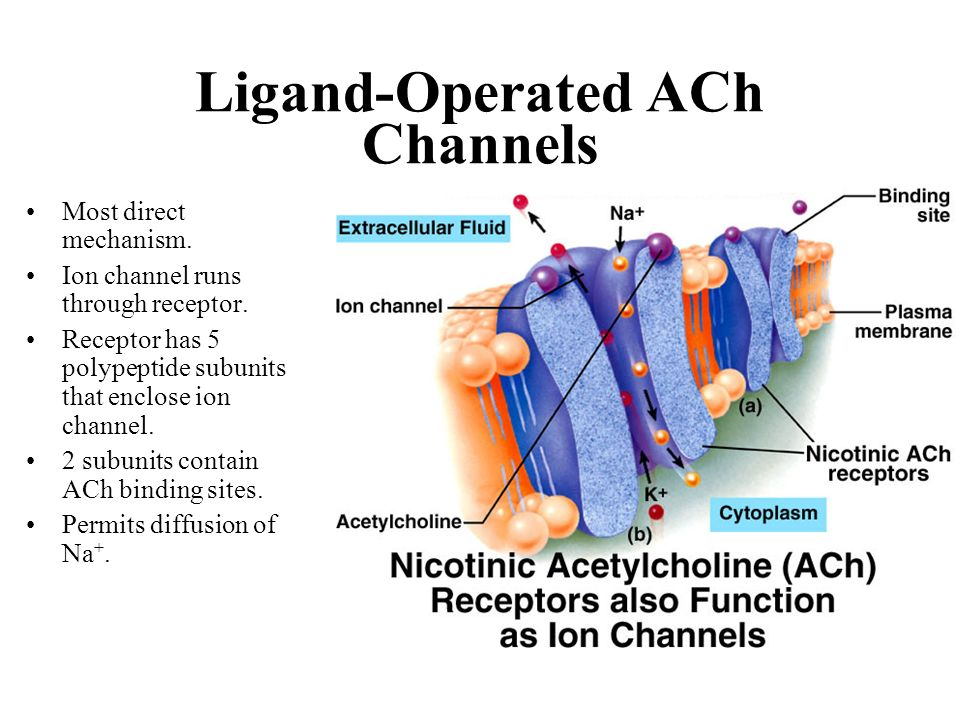Ligand-Operated ACh Channels