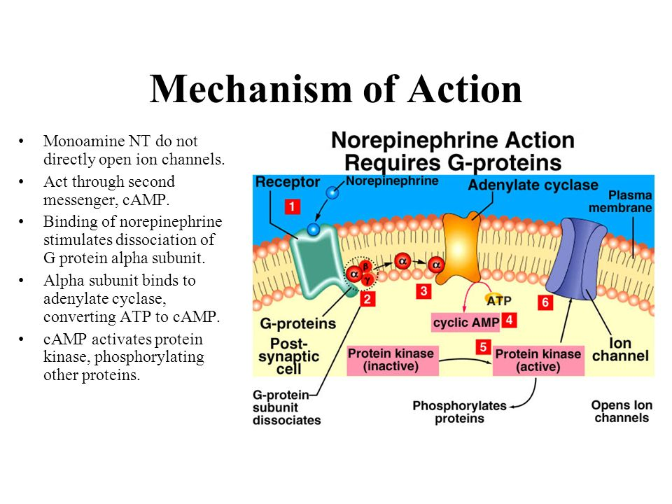 Mechanism of Action Monoamine NT do not directly open ion channels.