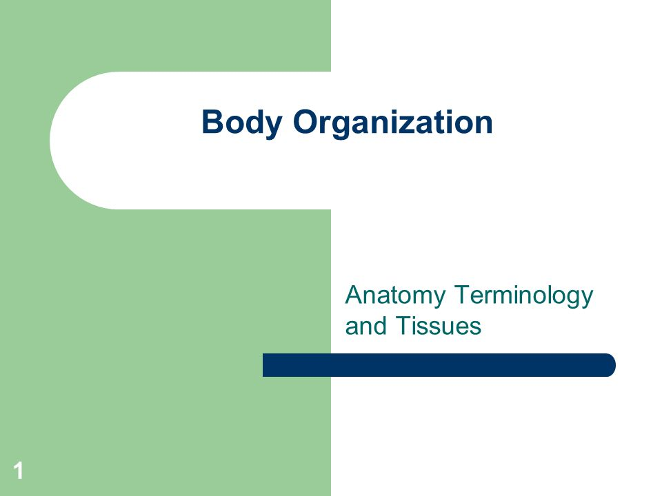 Anatomy Terminology and Tissues - ppt video online download