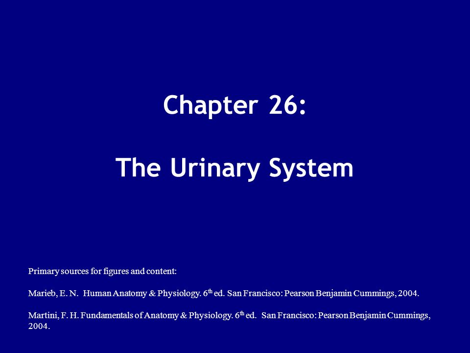 Chapter 26: The Urinary System - ppt download