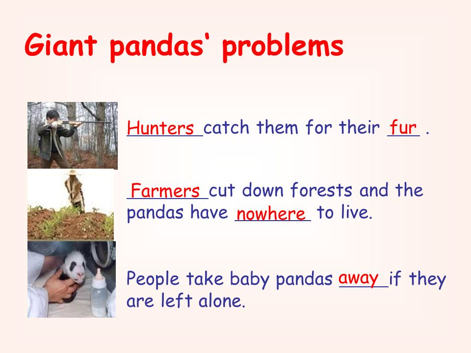 Giant pandas' problems