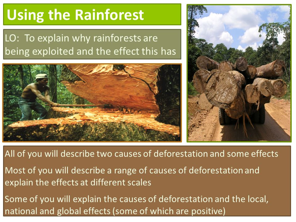 describe the causes and effects of deforestation essay Essay deforestation  the cause of deforestation are many bangladesh is the most densely populated country in the world  they effects of deforestation are .