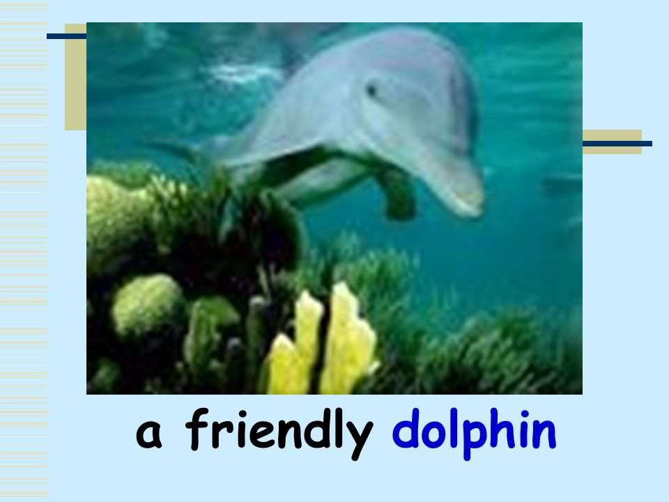 a friendly dolphin