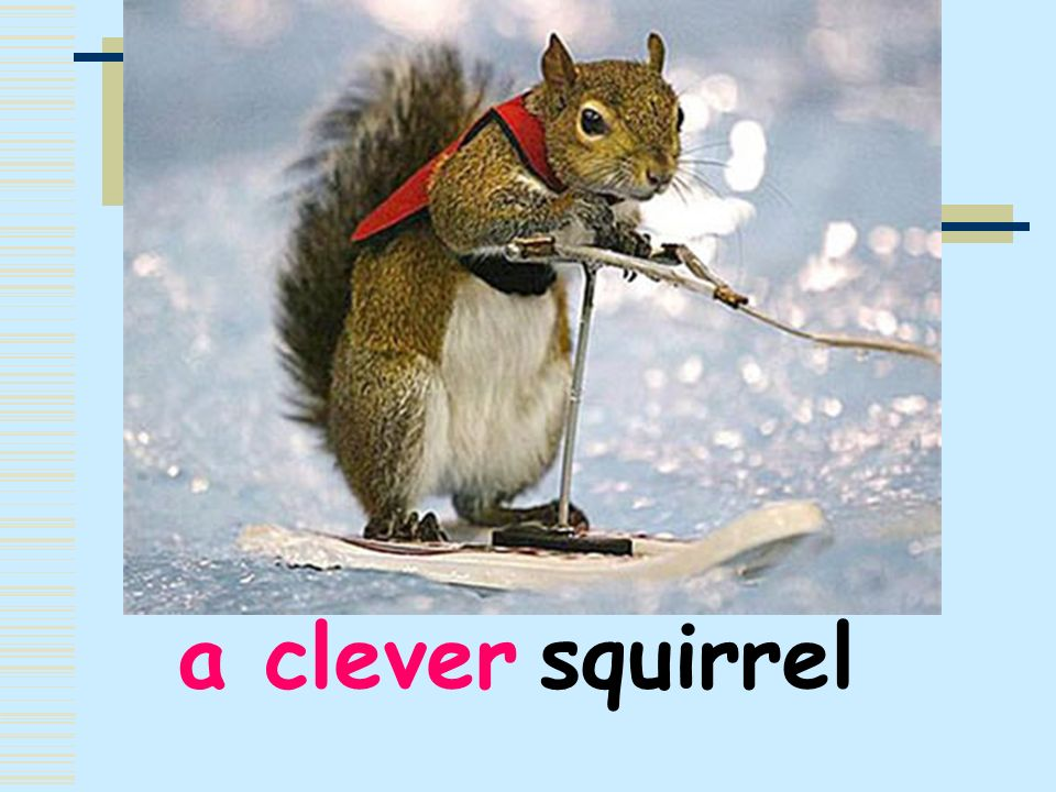 a clever squirrel