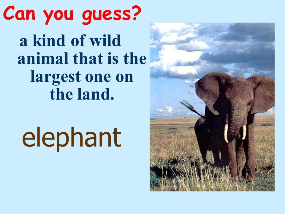 a kind of wild animal that is the largest one on the land.