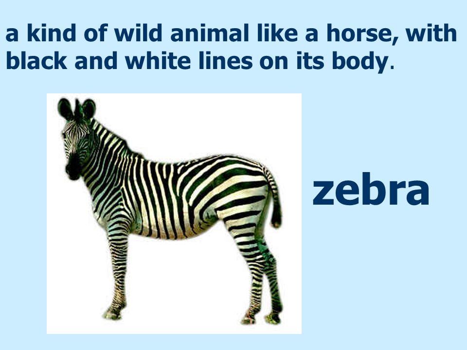 a kind of wild animal like a horse, with black and white lines on its body.