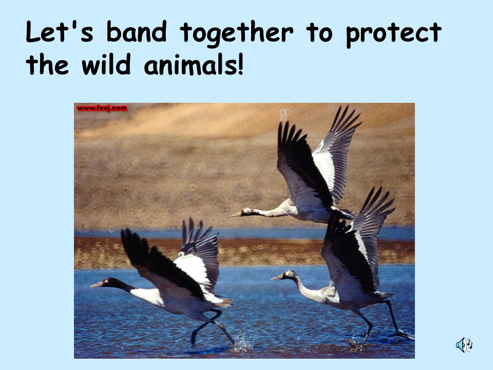 Let s band together to protect