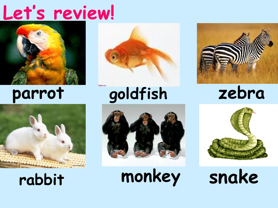 Let's review! parrot zebra goldfish monkey snake rabbit