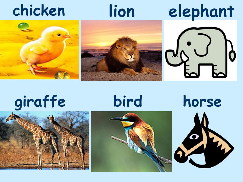 chicken lion elephant giraffe bird horse