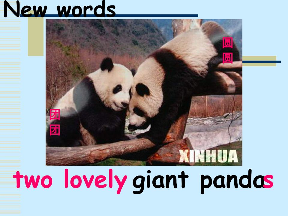 New words 团团 圆 two lovely s giant panda