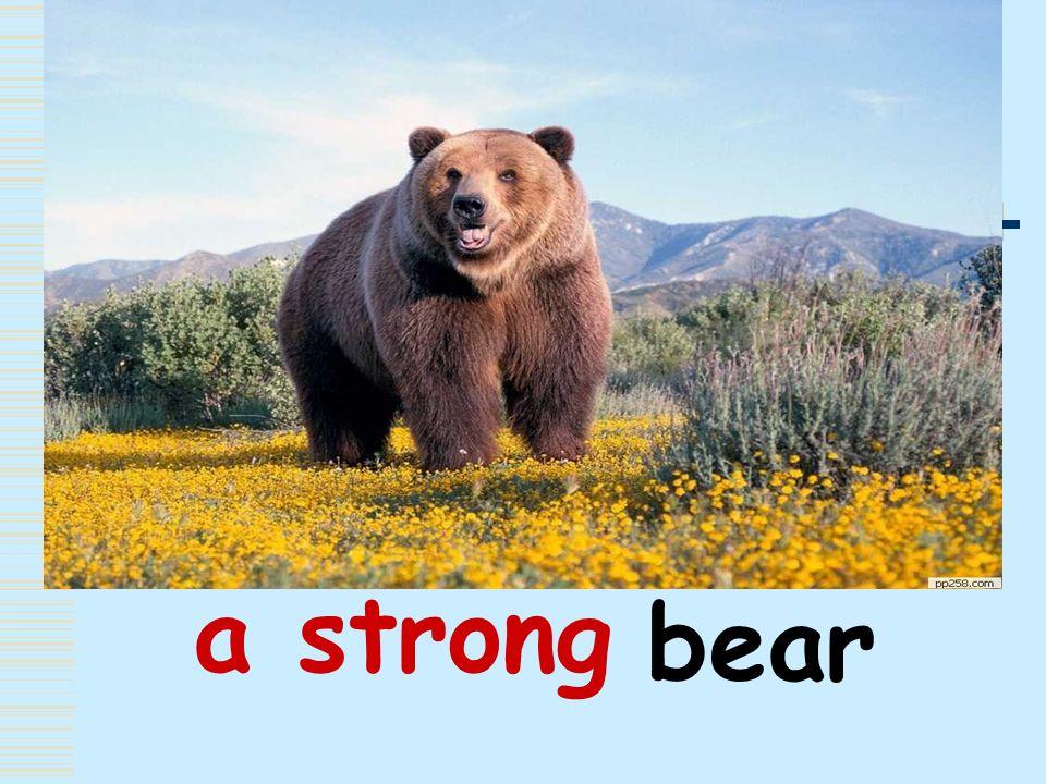 a strong bear