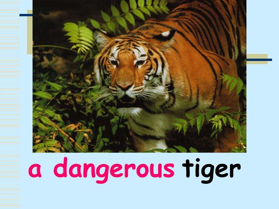 a dangerous tiger